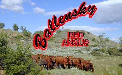 Ballensky Red Angus Logo